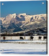 Timpanogos From The North Fields Acrylic Print