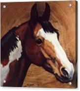Tingeys Fancy   Paint Horse Acrylic Print