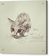 Tinkbott Acrylic Print