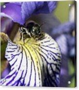 Tiny Bee Acrylic Print