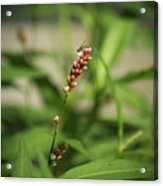 Tiny Bee On Wildflower Acrylic Print