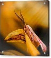 Tiny Butterfly Acrylic Print