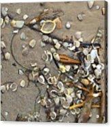 Tiny Crab Shells Acrylic Print
