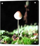 Tiny Mushroom 2 Acrylic Print