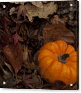 Tiny Pumpkin Acrylic Print