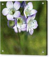 Tiny Purple And Blue Acrylic Print