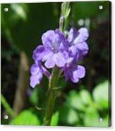 Tiny Purple Blooms Acrylic Print