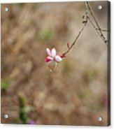 Tiny Red And White Wildflowers Acrylic Print