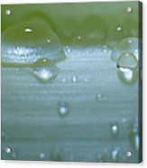 Tiny Water Drops On Stipe Acrylic Print