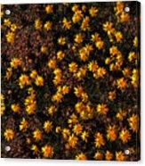 Tiny Yellow Flowrers On The Desert Floor Acrylic Print