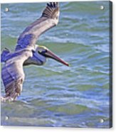 Tip Of The Wing Acrylic Print