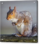 Tired Squirrel And Fly Acrylic Print