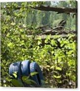 Tires Blue Acrylic Print