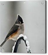 Titmouse In The Snow Acrylic Print