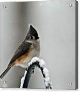 Titmouse In The Snow Acrylic Print