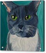 Titter, Cat Portrait Acrylic Print