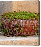 Tlaquepaque Potted Greens Acrylic Print