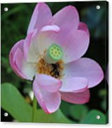 To Bee A Flower Acrylic Print