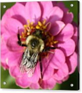 To Bee Or Not To Bee Acrylic Print