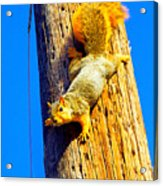 To Squirrels And To Me Acrylic Print by Guy Ricketts
