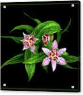 Toad Lily Acrylic Print