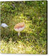 Toadstool Grows On A Forest Floor. Acrylic Print