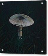 Toadstool Acrylic Print