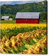 Tobacco Barn 2 Acrylic Print