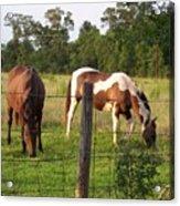 Tobiano And Bay Horses Acrylic Print