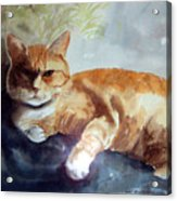 Toby The Best Cat Ever Acrylic Print