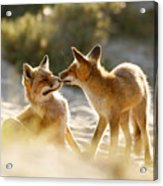 Togetherness - Mother And Kit Moment Acrylic Print