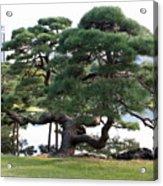 Tokyo Tree Acrylic Print
