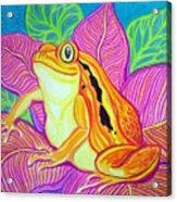 Tomatoe Frog Acrylic Print
