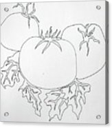 Tomatoes On A Vine In One Line Acrylic Print