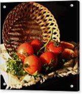 Tomatos. Out Of Basket. Acrylic Print