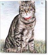 Tomcat Max Acrylic Print