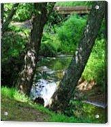 Toms Creek In Summer 3 Acrylic Print