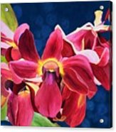 Tom's Orchid Acrylic Print