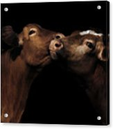 Toned Down Bovine Affection Acrylic Print