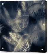Tonical Entangle Acrylic Print