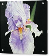 Tonto Basin Iris Acrylic Print