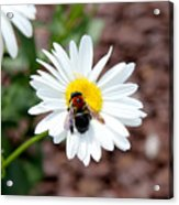 Too Close For Comfort Acrylic Print