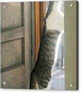 Tip Toe Cat Acrylic Print