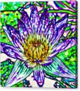 Top View Of A Beautiful Purple Lotus Acrylic Print