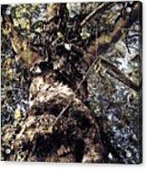 Topiary Acrylic Print