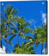 Tops Of Palms Acrylic Print