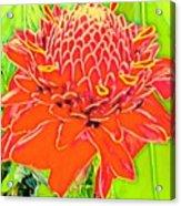 Torch Ginger Aloha Acrylic Print