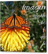 Torch Lily And Monarch Acrylic Print