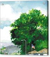 Torrey Pine Acrylic Print