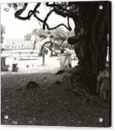 Torrey Pines Baggage Claim Acrylic Print